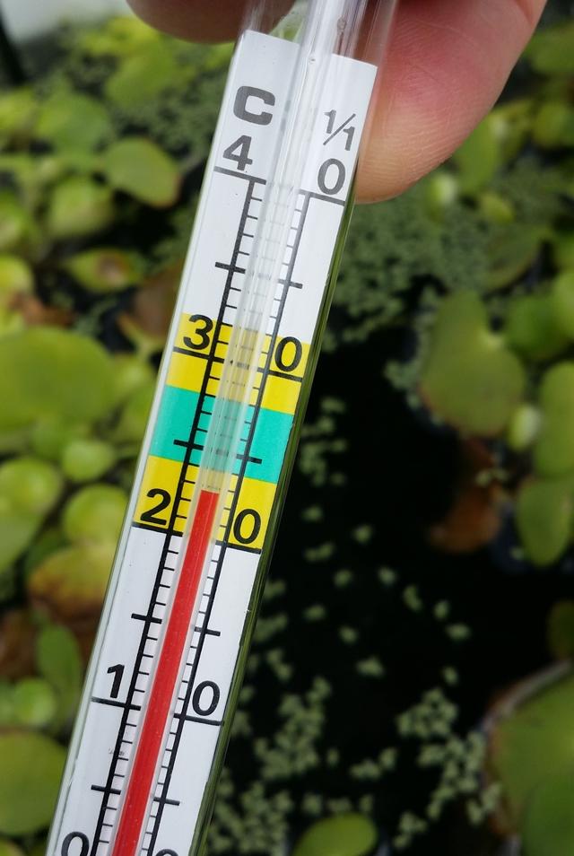 20180223 屋外水温23℃で快適なミナミヌマエビ水槽