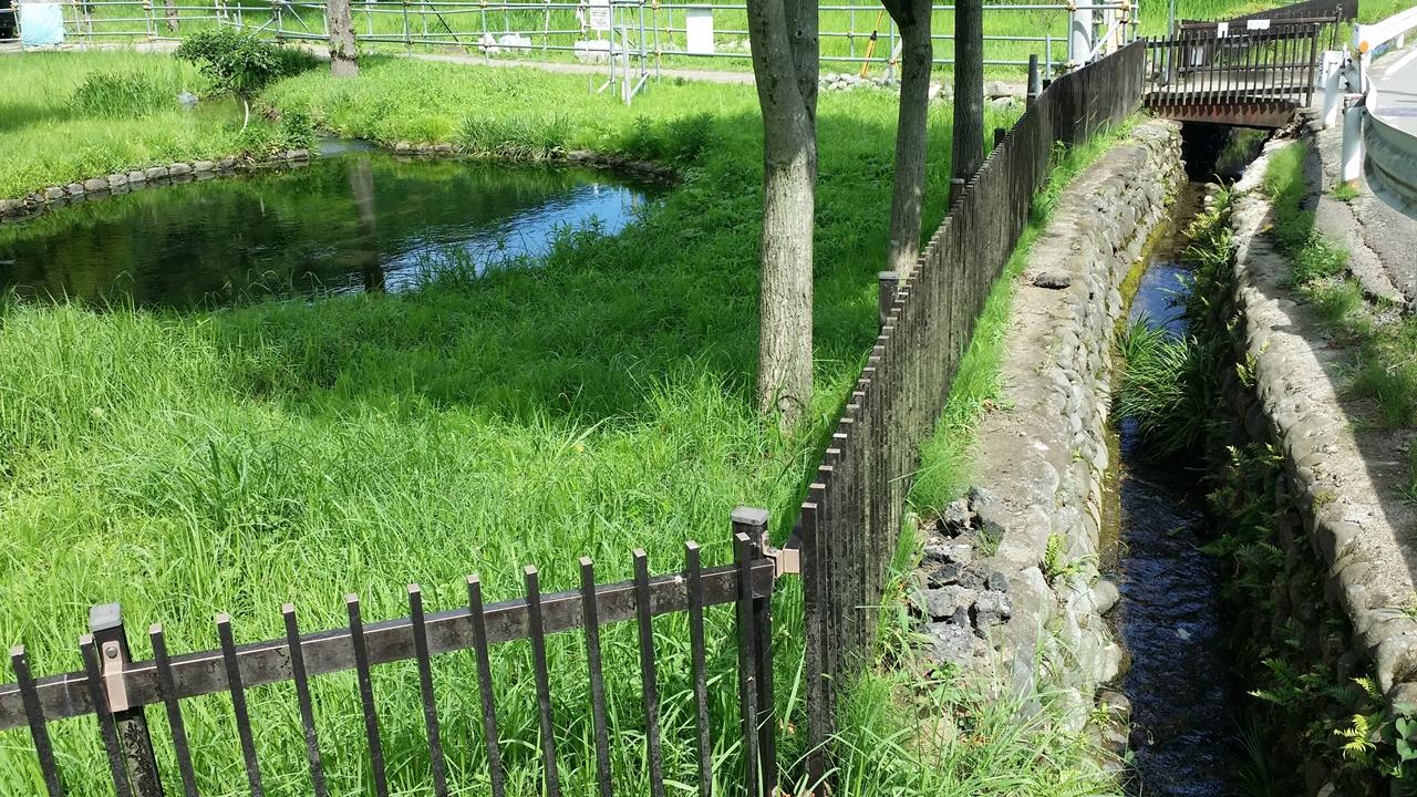 鶴見川源流の泉3