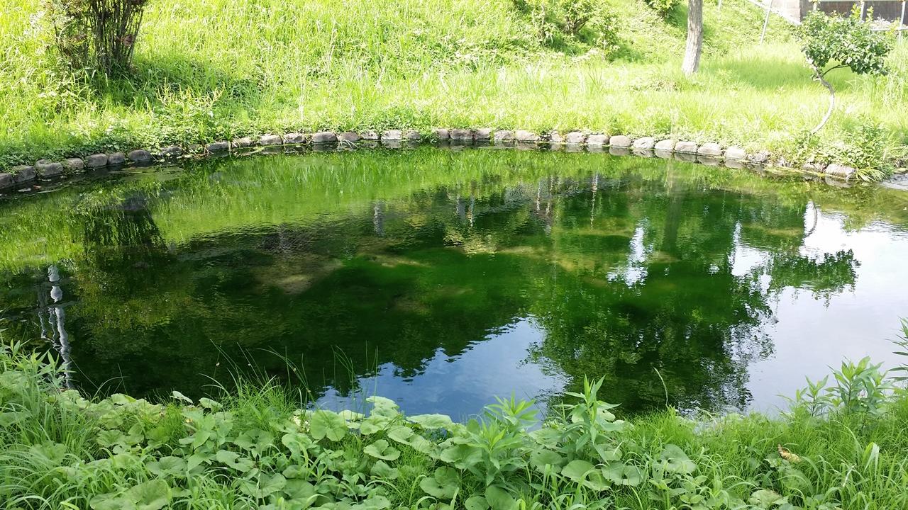 鶴見川源流の泉1