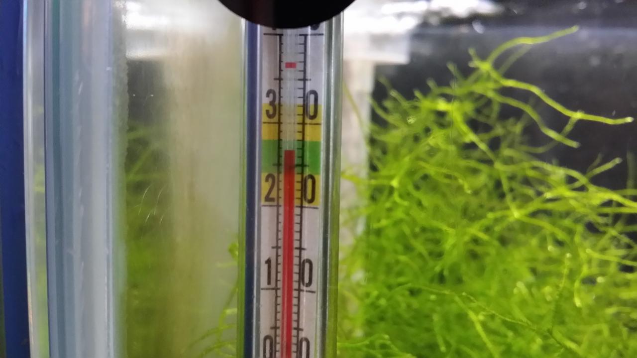 20180715 ミナミヌマエビ水槽はかろうじて水温27℃をキープ